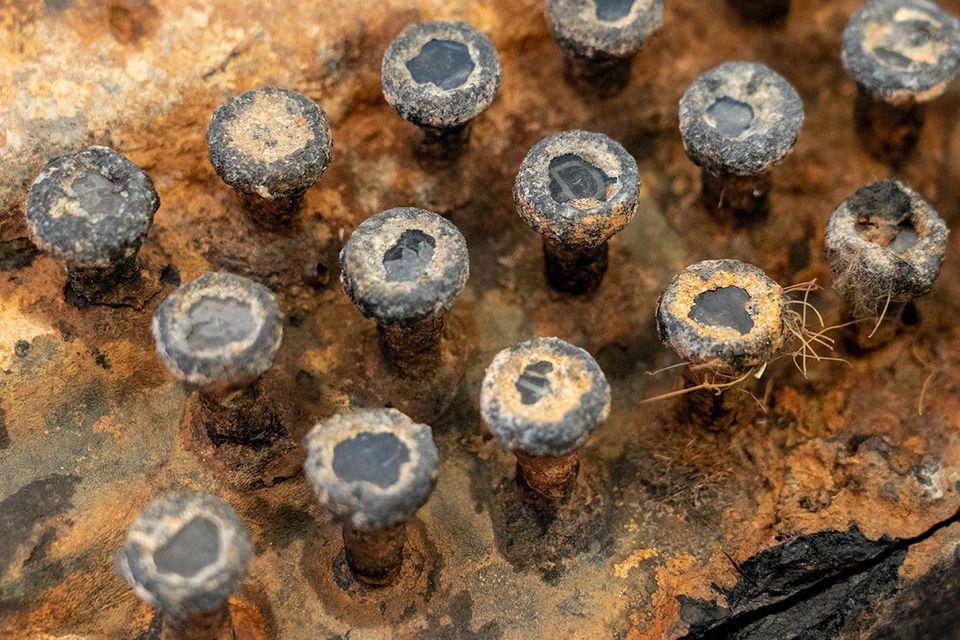 Die Ostsee hat Spuren hinterlassen: Chiffriermaschine Enigma