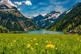 Vilsalpsee im Frühling mit blühender Wiese und Bergen im Hintergrund