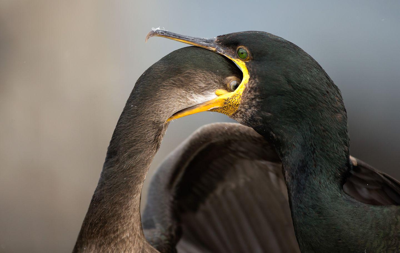 Brian Matthews/Bird Photographer of the Year