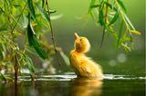 Zdeněk Jakl/Bird Photographer of the Year