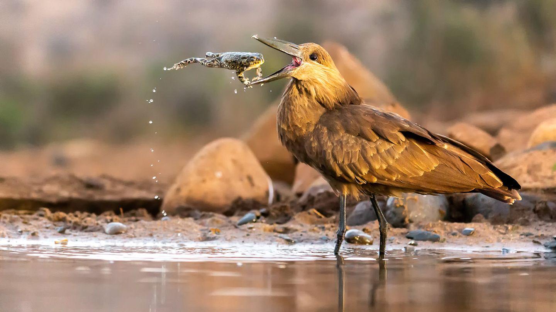 Daniel Zhang/Bird Photographer of the Year