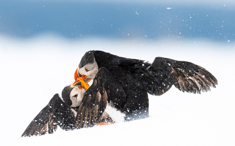 Øyvind Pedersen/Bird Photographer of the Year