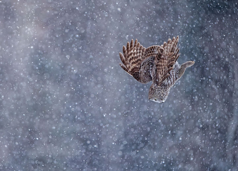 Scott Suriano/Bird Photographer of the Year