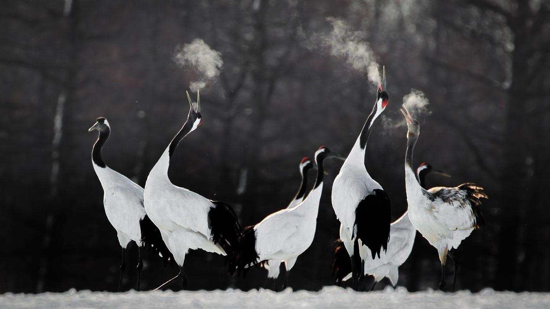 Li Ying Lou/Bird Photographer of the Year