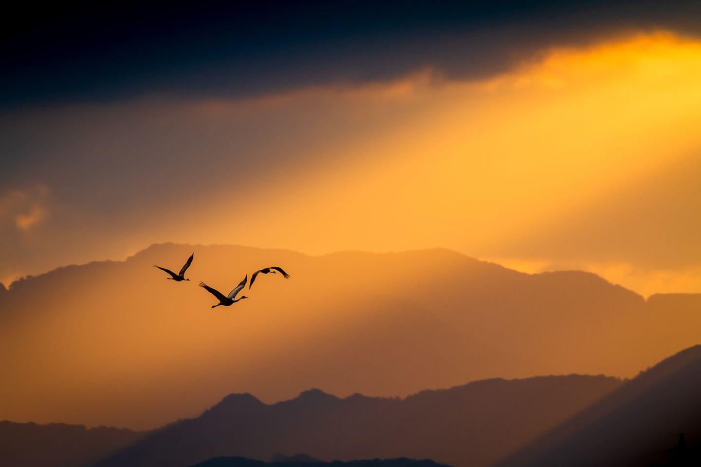Taku Ono/Bird Photographer of the Year