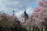 Kirschbäume blühen im Schlossgarten von Schloss Schwetzingen