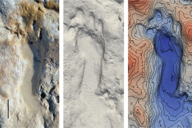 Die Spuren wurden dreidimensional vermessen. Da sie mit jeder Flut überschwemmt werden, sind sie von der Verwitterung bedroht