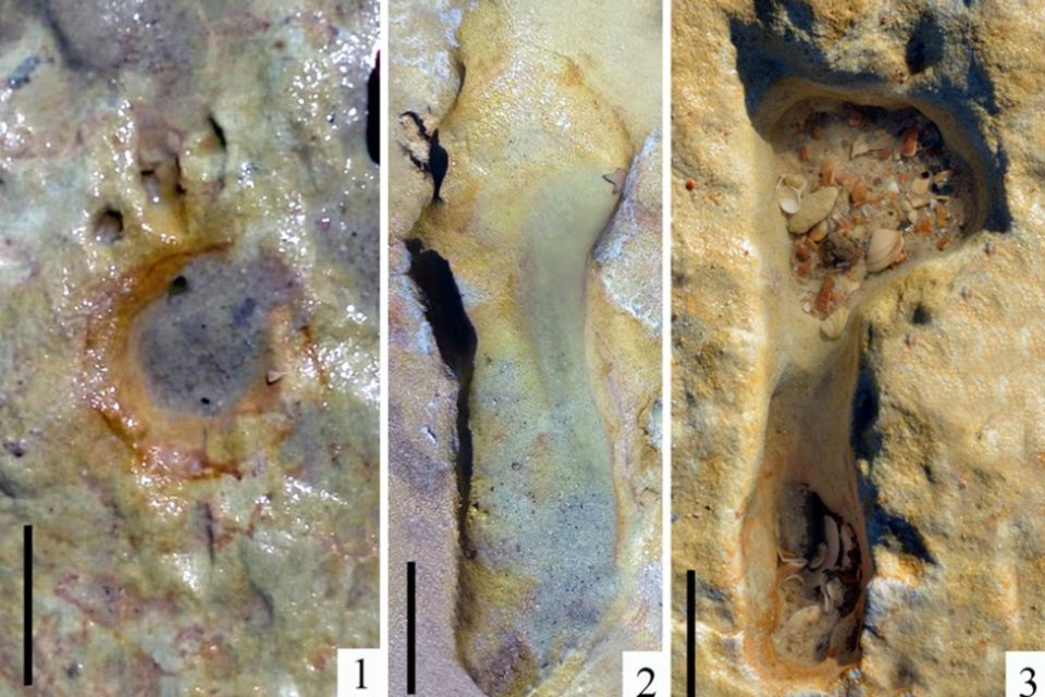 Bei manchen der Abdrücke sind auch Details wie die Zehen zu erkennen