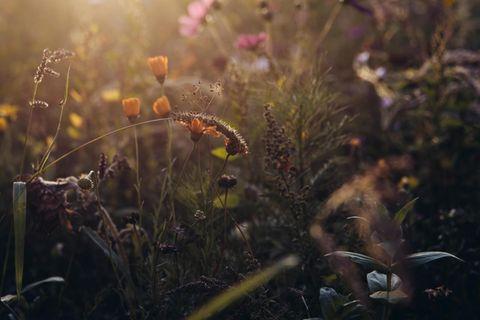 Intakte Idylle? Nein, Scheinwelt: Die Sommerwiese blüht auf dem Monheimer Campus des Chemiekonzerns Bayer – hier forscht das Unternehmen auf der Suche nach neuen Pflanzenschutzmitteln