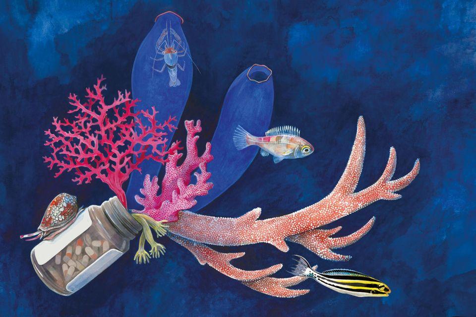 Viele Forscher sehen die Ozeane als bislang ungenutzte Wirkstoffkammer: Zahlreiche Meerestiere könnten Substanzen bergen, die eine wichtige medizinische Anwendung finden