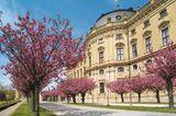 Kirschbäume vor der Residenz in Würzburg