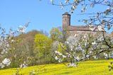 Kirschbäume blühen in Witzenhausen
