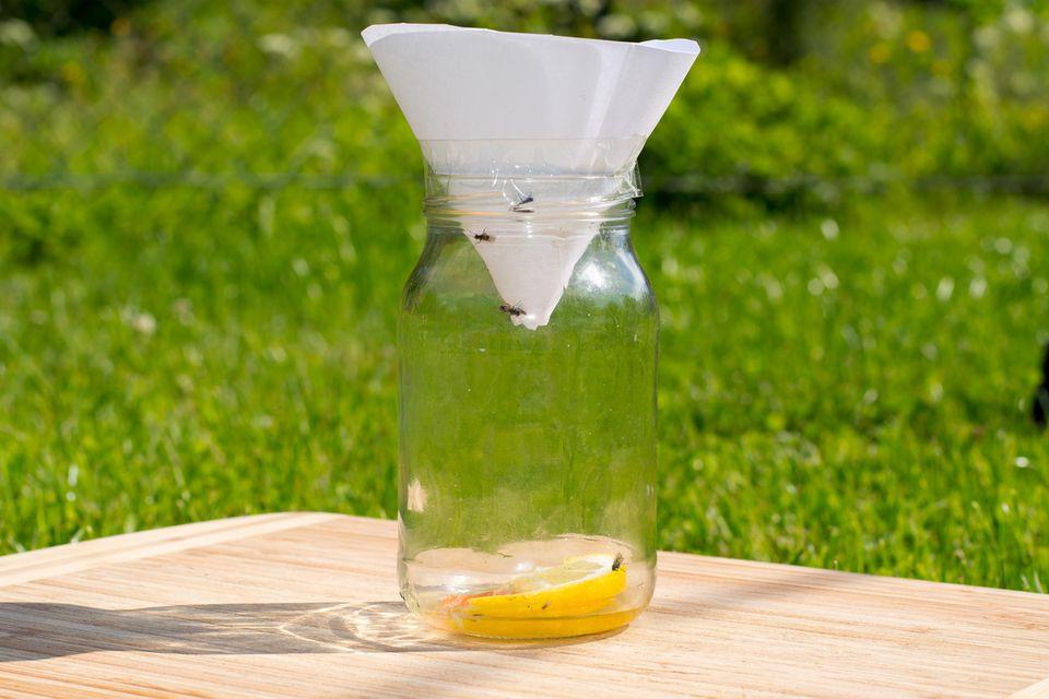 Fruchtfliegenfalle im Glas mit Wasser, Zucker und Zitrone