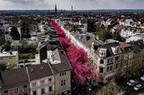Kirschblüte in Bonn auf der Heerstraße