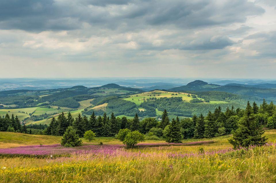 Quiz: Was wissen Sie über den Zustand der Natur in Deutschland?