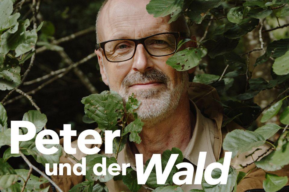 Peter und der Wald