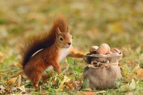 Tierwelt: Fünfmal staunen über Eichhörnchen