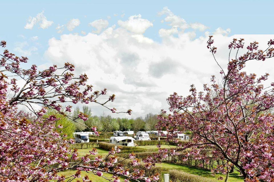 Camping: Experten empfehlen: Zehn traumhafte Campingplätze in Deutschland