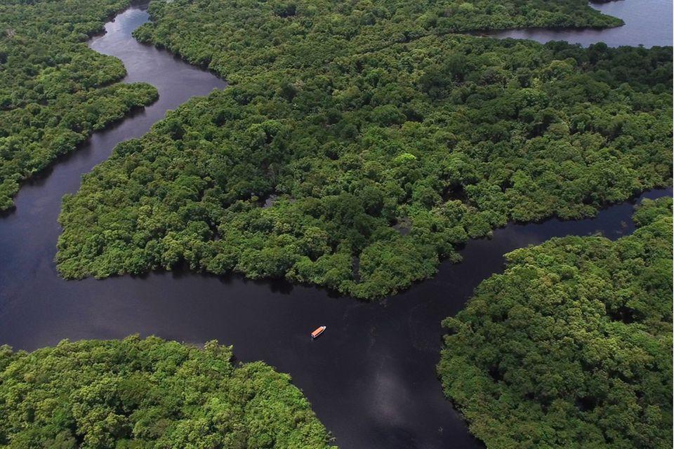 """Der Regenwald in Brasilien: Ein Gebiet, das einst als """"grüne Lunge"""" unserer Erde galt, stößt laut neuesten Studien mehr CO2 aus, als es bindet"""