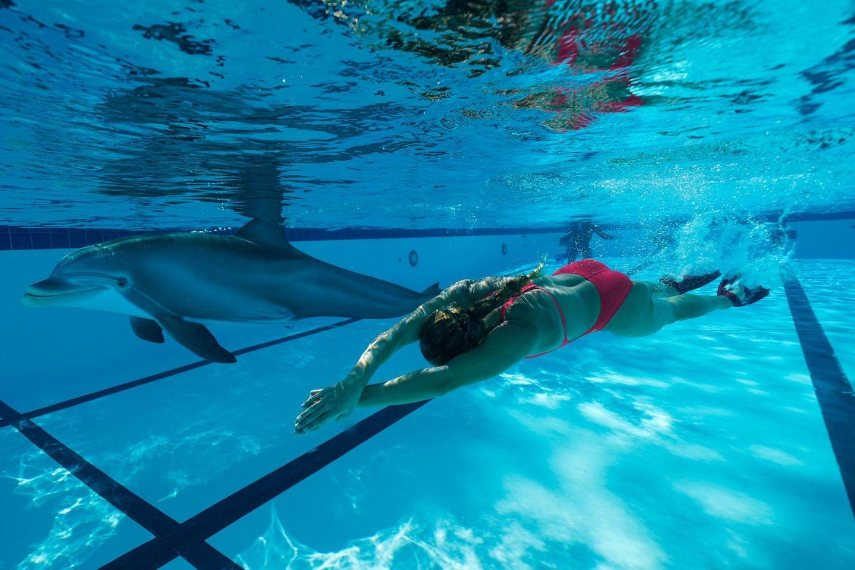 Delfin-Roboter