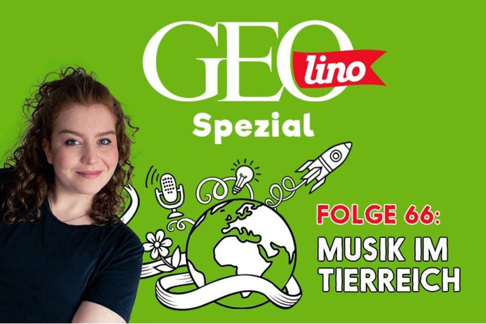 In Folge 66 unseres GEOlino-Podcasts geht es um Musik im Tierreich.