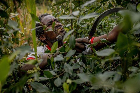 Der Khat-Bauer Mustafa Mume erntet die Blätter auf seiner Plantage in Äthiopiens Hochland und kaut die Droge dabei selbst: Zermalmt quillt sie zwischen seinen Zähnen hervor und ruiniert allmählich sein Zahnfleisch. Die Pflanze bringt ihm einen bescheidenen Reichtum, den er mit Mais oder Hirse nie erzielt hätte
