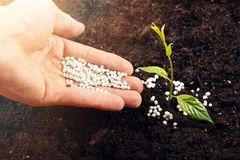 Hand, die eine junge Pflanze mit Dünger versorgt