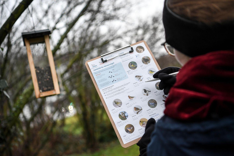 """Eine junge Frau zählt bei der """"Stunde der Wintervögel"""" des Naturschutzbunds Deutschland die Vögel an einer Futterstelle"""