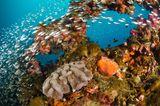 Fische im Great Barrier Reef