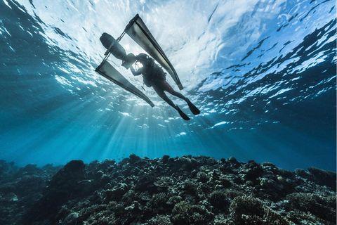 D: 6 mOuter reef, Banban and Muli IsletsJonathan Lancelot (Tara dive & hyperbaric chief) collecting plancton on a sampling site.