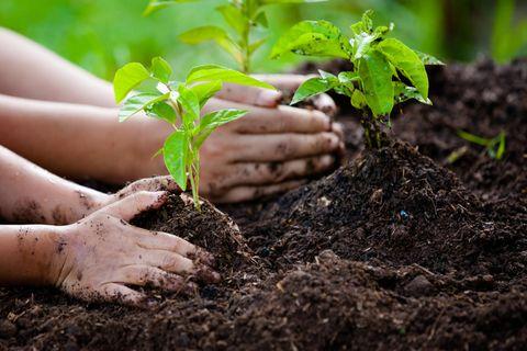 Bäume zu pflanzen, ist immer ein gute Idee. Doch nicht alle Aufforstungsprojekte sind auch nachhaltig