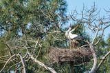 Le Teich: Besuch im Vogelpark