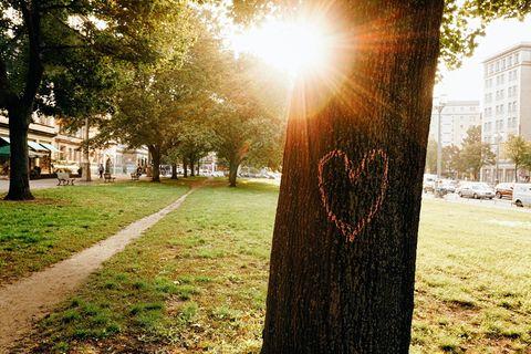 Ob auf Grünstreifen, in kleinen Parks oder entlang asphaltierter Straßen: Wo immer Bäume das Stadtbild prägen, verbessern sie Luft und Klima messbar