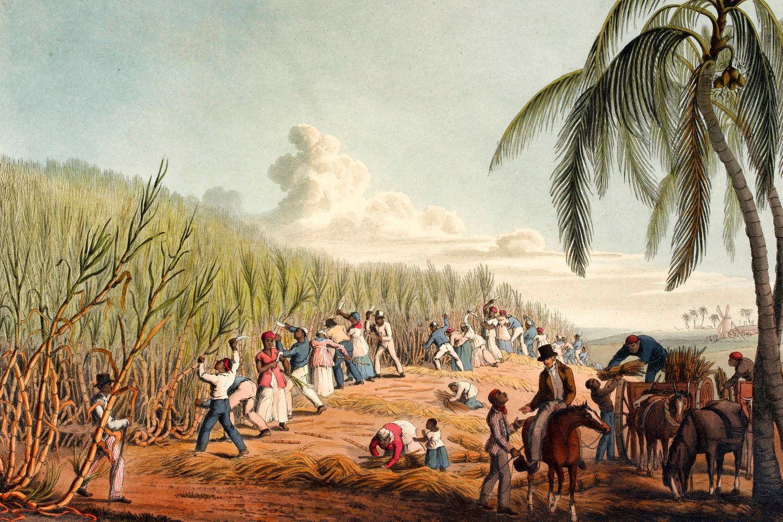 Der Verkauf von Zucker macht die Kolonialherren der Karibik reich. Doch die mühsame Arbeit auf den Plantagen leisten aus ihrer Heimat verschleppte Afrikaner