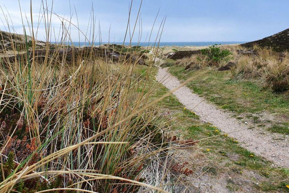 Dünenweg zum Meer