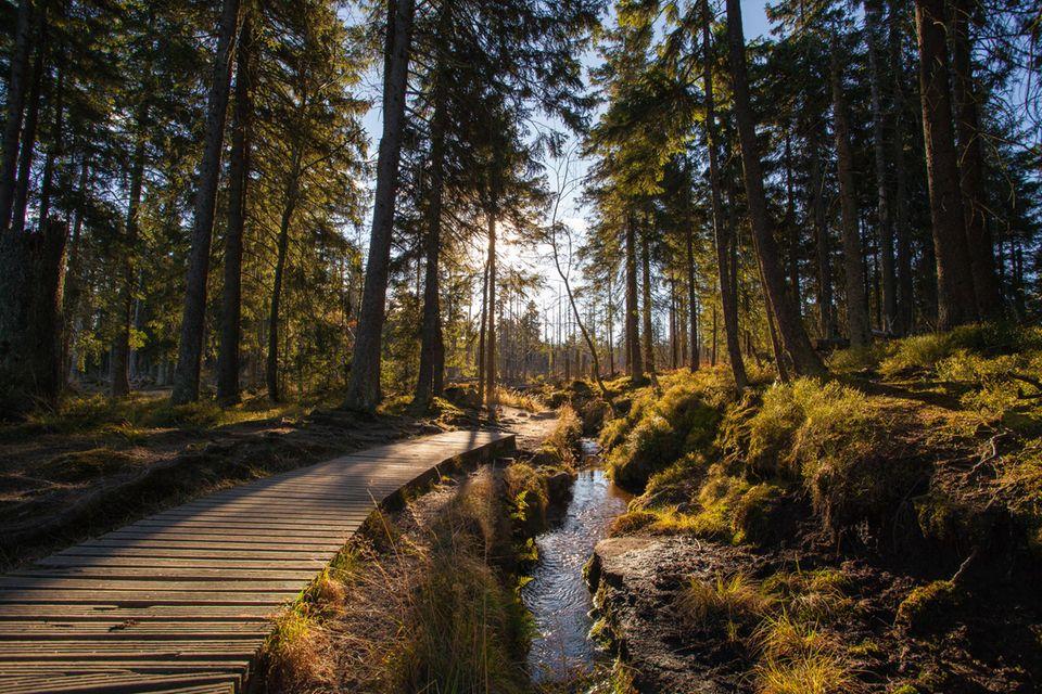 Wanderweg im Harz an einem sonnigen Herbsttag