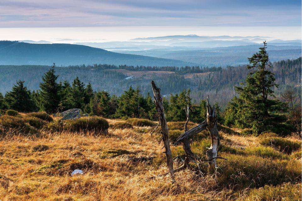 Hier mit Blick vom Brocken im Harz