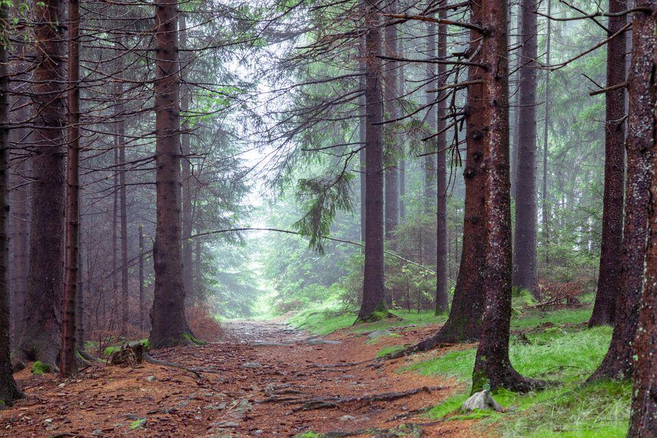 Kaiserweg im Harz