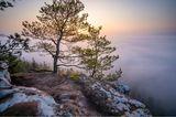 """17.05.2021      """"Dichter Hochnebel bedeckte an diesem Morgen weite Teile des Pfälzerwaldes. Knapp über der Nebelgrenze konnte ich diese fantastische Szenerie kurz nach Sonnenaufgang festhalten. Im Vordergrund der für den Pfälzerwald typische Buntsandsteinfels mit Wetterkiefer, im Hintergrund ein dichtes Nebelmeer mit herausschauenden Baumkronen und der aufgehenden Sonne.""""      Kamera:Sony a7iii + Tamron 17-28mm f/2,8  Mehr Fotos vonPhilipp"""