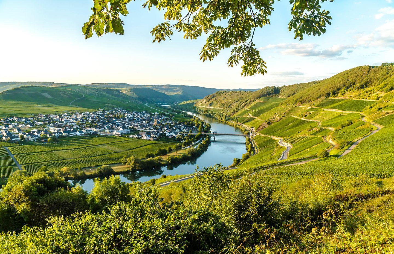 Am Moselsteig mit Blick auf das Moseltal und den Ort Trittenheim