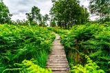 Etappe des Eifelsteigs im Naturpark Hohes Venn-Eifel