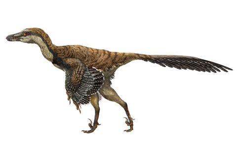Evolution: Warum die Dinosaurier noch heute unter uns sind