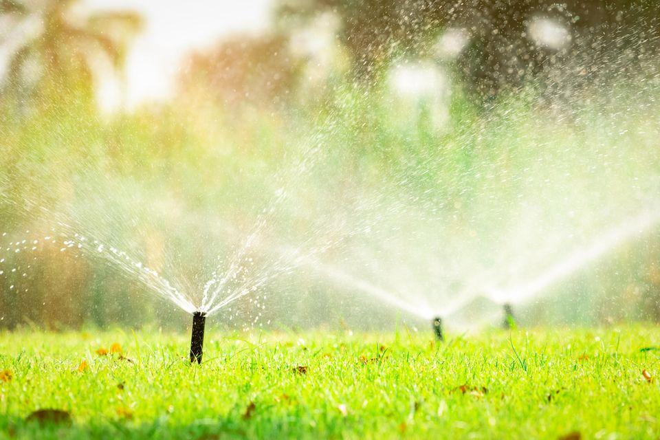 Rasensprengner bewässern den Rasen