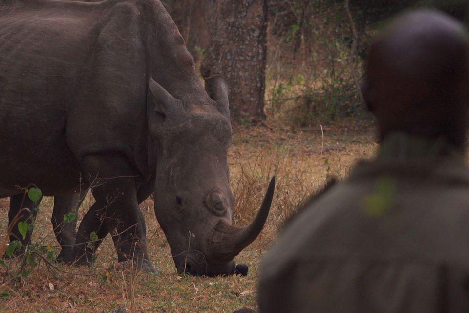 Nashörner und Ranger kennen - und respektieren - sich seit Jahren