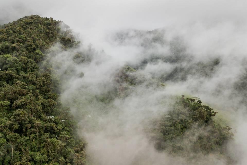 Das Projektgebiet: Der tropische Nebelwald im Intag wächst bis auf 3000 Meter Höhe. Viele Tier- und Pflanzenarten kommen nur hier vor