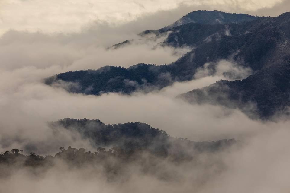 Fragen und Antworten: Die Bergregenwälder der abgeschiedenen Region Intag im Norden Ecuadors gehören zu den artenreichsten Ökosystemen der Erde