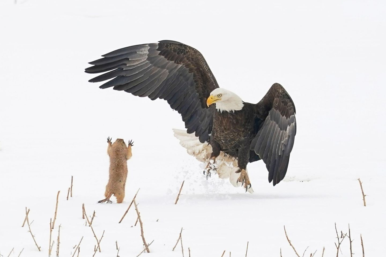 The Comedy Wildlife Photography Awards 2021/Arthur Trevino
