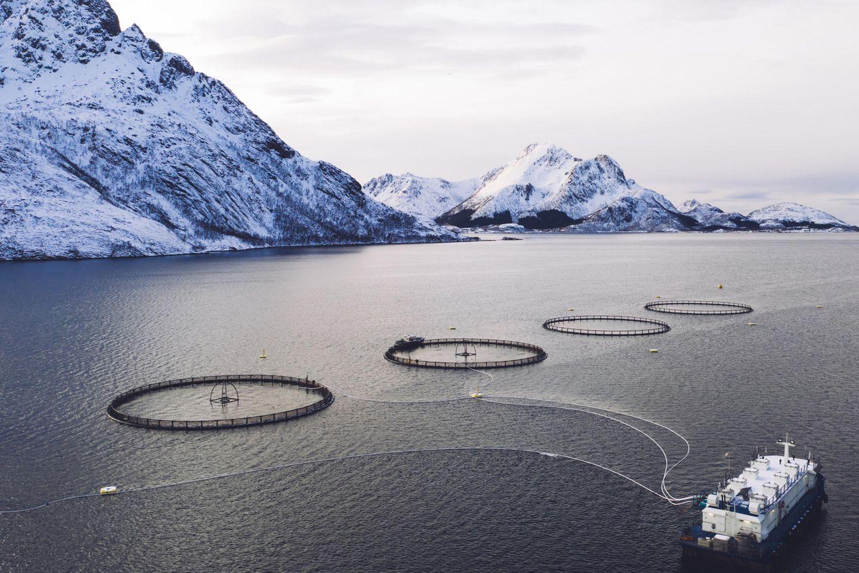 Luftaufnahme von Rundnetzen einer Lachsfischzucht in der norwegischen See