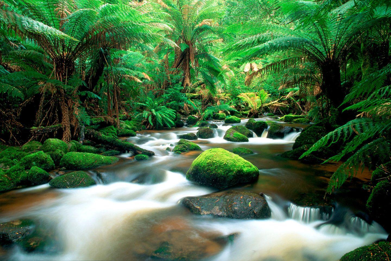 Tasmanische Wildnis – Regenwald