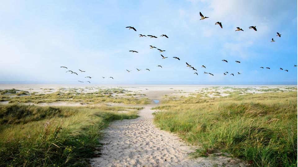Vögel fliegen über Langeoog
